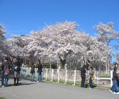 桜 Part3